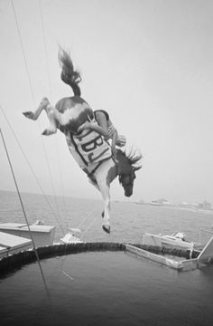 vintage diving horse photo, texas :(