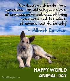 World Animal Day Scraps