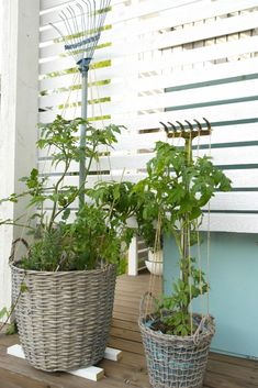 Tomaattitarha. Istuta koreihin tomaatteja, herneitä tai mansikoita. Tue kasvit haravan ja siihen kiinnitettyjen narujen avulla.