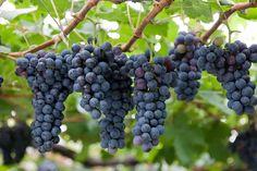 桔梗ヶ原ワインバレー Kikyogahara Wine Valley