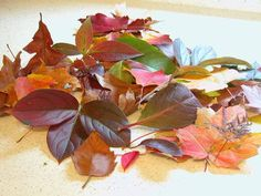 How to preserve and press fall leaves using several different methods. I love this idea...to use as artwork, for wreaths, etc.
