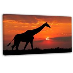 """DesignArt 'Giraffe Silhouette at Sunset' Photographic Print on Wrapped Canvas Size: 16"""" H x 32"""" W x 1"""" D"""