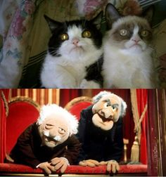 Grumpy cats vs Muppets