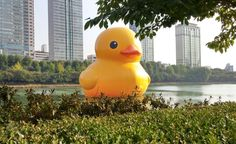Rubber duck #meditating on a lake...