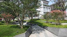 Zelkova Public Realm — Landworks Studio, Inc. Sky Garden, Garden Bridge, Contemporary Landscape, Urban Landscape, Urban Heat Island, Domaine Public, Wetland Park, Rooftop Design, Public Realm