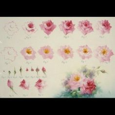 Thank you Paula Collins for this rose painting step sheet. PS: PLEASE SEE LARGER IMAGE PINNED FURTHER ABOVE THIS PIN