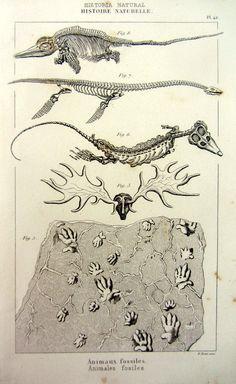 1852 paléontologie antique imprimer, squelette de plesiosaurus ichthyosaurus vintage gravure, plaque de pistes fossiles animaux cornes de