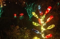 Southern bottle trees are lit up during Holidays at the Garden