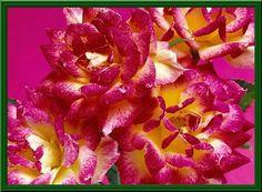 Immagini e foto di fiori