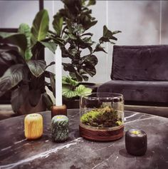 Bring the outdoors indoors with Botanica Boutique plant vessels.