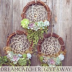 """2,383 Likes, 360 Comments - Jen Tao (@jenssuccs) on Instagram: """"Orders for these Living Succulent Dreamcatchers are opening up on Dec 1! We're so excited about it…"""""""