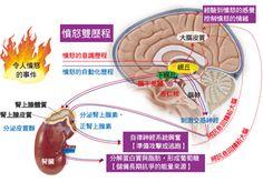 腦的美麗境界 Wonderful Brain