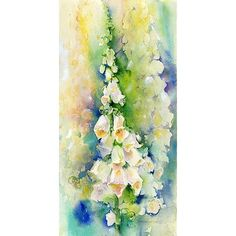 White Foxglove Print By Sheila Gill.   Greetings Cards   Prints   Gift Wrap