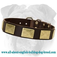 Reliable #Collar with a Strong Ring and Buckle for #English #Bulldog $39.90 | www.all-about-english-bulldog-dog-breed.com