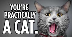 See if you can separate feline fact from fiction with this quick quiz. http://www.petsmartcharities.org/check-your-cattitude