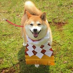 Smiling Red Shiba Inu.  If you're a Dog Lovers, check out this Dogs collection, you may like it :) Here's link ==> https://www.sunfrog.com/tuanldshirt/dogs  #dogs #ilovedogs