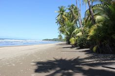 Mondays...in Costa Rica. Find a coconut find some shade and relax.  #mondayblues #mygetaway #vistacelestial #costarica #uvita #vacation