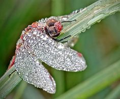 Close Up Photos of Insects Covered in Water Droplets