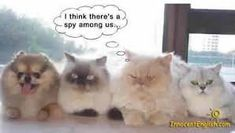 Image result for cute funny dog pictures
