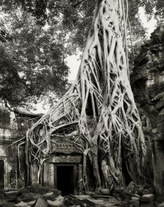 """from the book: """"Ancient Trees: Portraits of Time"""" by San Fransisco photographer Beth Moon. She has been searching out the earth's largest and oldest living monuments in the most remote locations for the last 14 years. Terra Verde, Tree Woman, Old Trees, Tree Photography, Photography Magazine, Digital Photography, White Photography, Photography Tips, Tree Forest"""