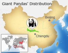 Giant Pandas: All the things you want to know