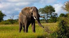 「elephant」の画像検索結果