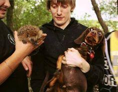 OMG - I love this one! *lol* Dachshund meets hedgehog! :D
