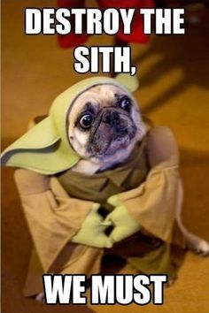 Master Yodog