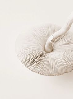 Mushroom details