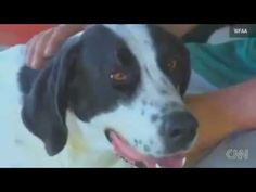 Dog Remains Faithful to Owner Who Passed Away