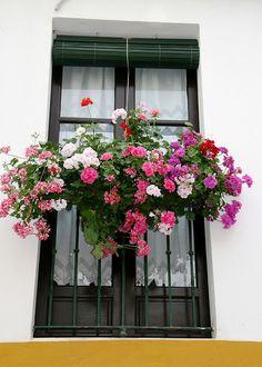 Window Box by anthsnap!, via Flickr