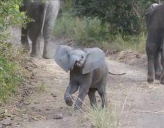 Cuteness Break: Baby Elephant Surprises Tourists