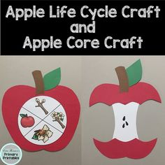 Tree Life Cycle, Apple Life Cycle, Life Cycle Craft, Kids Learning Activities, Autumn Activities, Science Activities, Elementary Science, Teaching Science, Elementary Schools