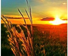 sunset in wheatfield Country Strong, Moon Pictures, Wheat Fields, Ocean Sunset, Back Road, Country Roads, Country Life, What A Wonderful World, Beautiful Horses
