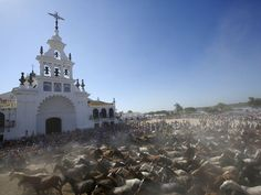 "Wild mares trot past the shrine of El Rocio during the ""Saca de yeguas"" event at El Rocio, in Almonte, southern Spain. Every year, hundreds of wild mares are grouped together by riders at Donana National Park and taken to a livestock fair in Almonte village"