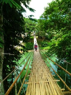 Bamboo hanging bridge in Sevilla, Bohol, Philippines. Travel Philippines!