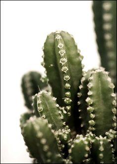 Vihersisustus, kodinsisustus Cactus Plants, Shop, Cactus, Cacti, Store