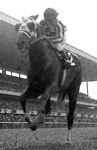 Turcotte called Secretariat 'the perfect horse. Pretty Horses, Beautiful Horses, Derby Horse, Faster Horses, The Great Race, Triple Crown Winners, Sport Of Kings, Majestic Horse, Thoroughbred Horse