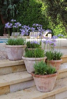 Terracotta pots or Agapanthus pots on the terrace # Te .- Terrakotta-Töpfe oder Agapanthus-Töpfe auf der Terrasse # Terrasse # ländlich… Terracotta pots or Agapanthus pots on the terrace # Terrace # Rural garden # Ideas # gardendeco - Garden Urns, Terrace Garden, Garden Planters, Terrace Ideas, Garden Seating, Outdoor Seating, Pergola Ideas, Potted Garden, Courtyard Gardens