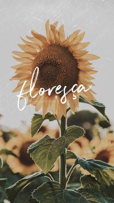 Wallpapers Tumblr, Cute Wallpapers, Instagram Blog, Instagram Story, Experiment, Cute Pictures, Dandelion, Prints, Flowers
