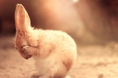 Don't look at me...!! (Rabbit)
