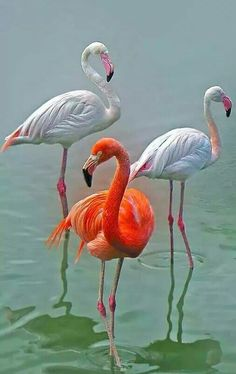 flamingos of a different color!
