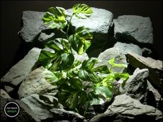 silk reptile plant or terrarium plant: monstera leaves from ron becck designs. #ronbeckdesigns