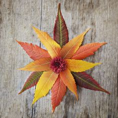 Mandala pattern made out of Leaves art Flower Rangoli, Flower Mandala, Nature Crafts, Fall Crafts, Leaf Flowers, Dried Flowers, Flower Frame, Flower Art, Nature Collage