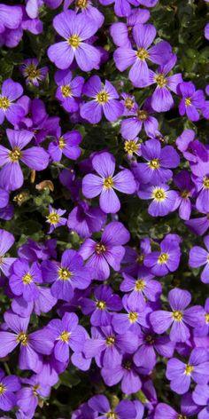 (•ॢ◡-ॢ)                                                                Purple