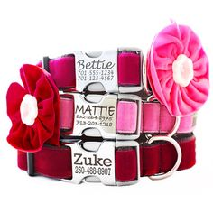 Engraved Buckle Dog Collar - Bettie, Zoe & Holly w/ Velvet Flowers