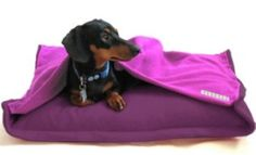 My puppy needs this! She is constantly trying to under the covers with me!