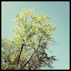 Nějaký strom / Some tree Renaissance, Poetry, Fruit, Plants, Instagram, Poetry Books, Plant, Poem, Poems