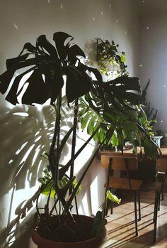 Domowa dżungla House jungle Polish jungle (10)