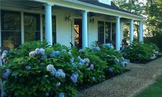 Find your ideal Edgartown vacation rental home, cottage or condo using our Power Search, tailored for Marthas Vineyard summer and beach rentals. Coastal Gardens, Porch Garden, Hydrangeas, Nantucket, Daffodils, Cape Cod, Summer Beach, Cottage, Martha's Vineyard